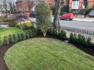 Planting the hedge Front Garden - Northbrook Road